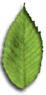 bbrooks fine flowers - small leaf logo