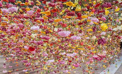 30,000 flowers