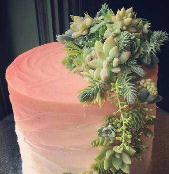 succulent cake. greenbouquet