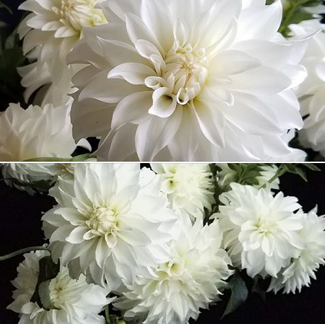 white dahlias.ff.il.high holy days