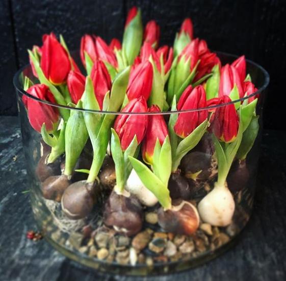 garden district _ memphis.  red bulbs
